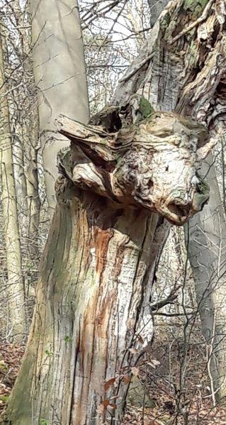 Baum, Märchen, Wald, Fabelwesen, Holz, Mesebergforst
