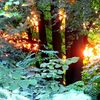 Durchblick - durchblick,september,sätsommer,sonne,sonnenuntergang,laub,baum,abend,sommer,herbst,feierabend
