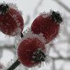 Kalt, Winter, Frost, Hagebutte