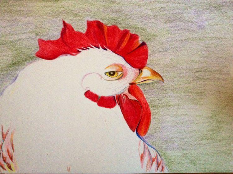 Tiere, Farben, Zeichnung, Zeichnungen, Henne