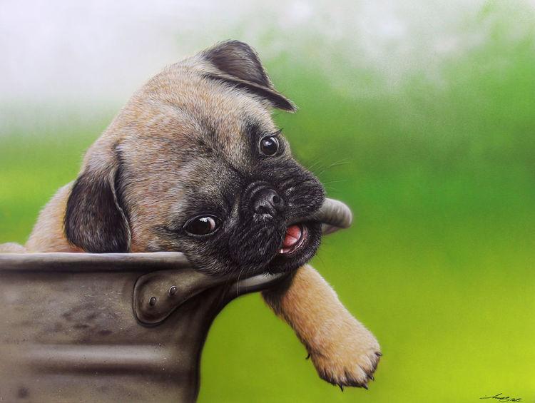 Sprühkunst, Airbrush, Hund, Mops, Malerei