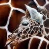 Airbrush, Sprühdose, Giraffenkind, Giraffe