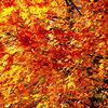 Herbst, Zweig, Blätter, Fotografie