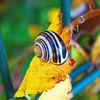 Schnecke, Herbst, Blätter, Fotografie