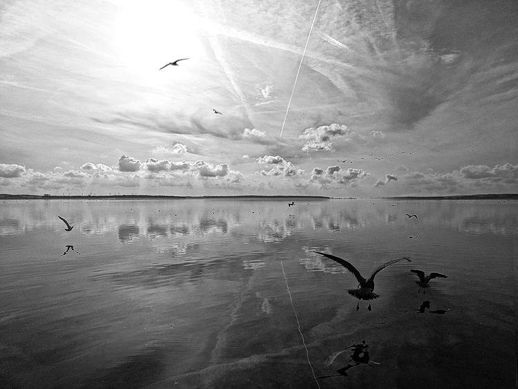 Lagune, Serenety, Schattenreich, Grau, Natur, Salz