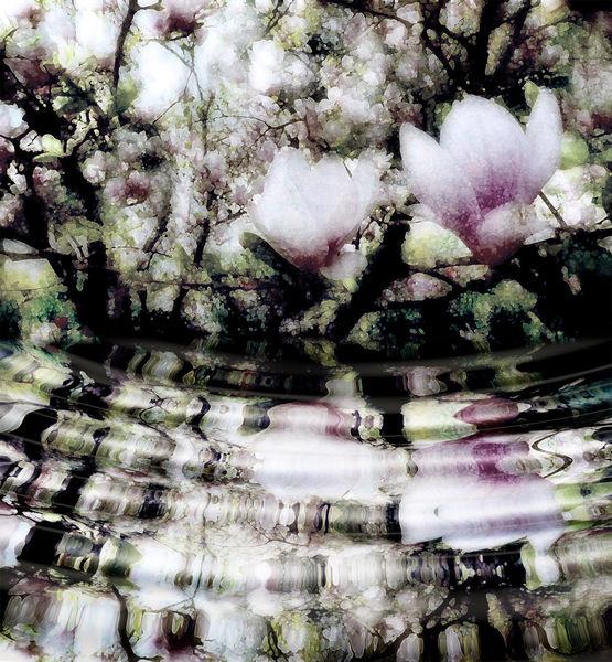 Stimmung, Schuss, Weiß, Blüte, Existenz, Licht