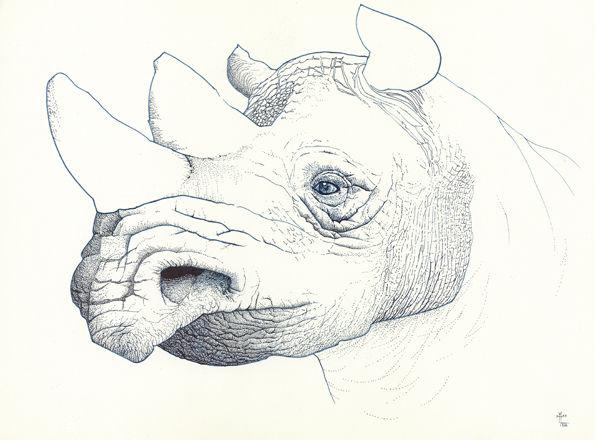 Horn, Nashorn, Blau, Portrait, Nase, Zeichnungen
