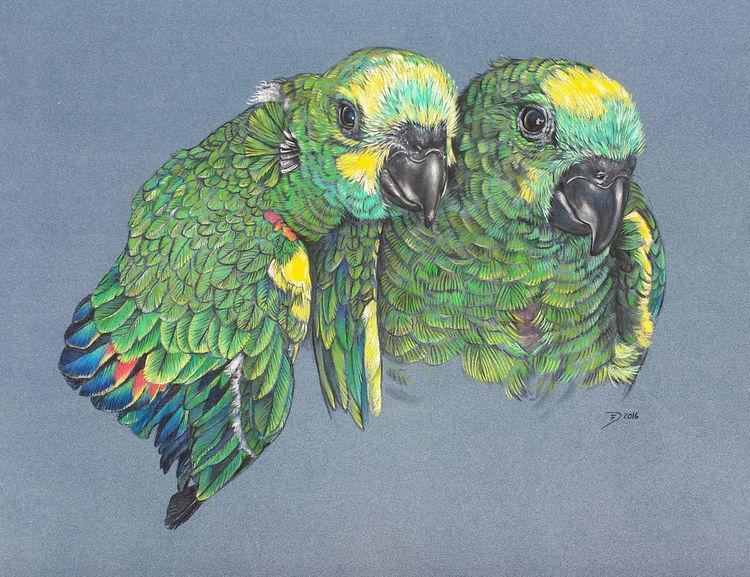 Vogel, Grün, Papagei, Federvieh, Malerei