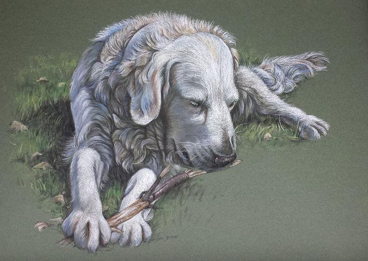 Tierportrait, Labrador, Tiere, Retriever, Hund, Zeichnungen