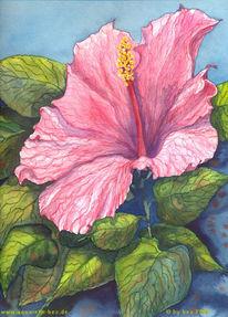 Grafik, Aquarellmalerei, Aquarell, Hibiskus