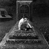 Grabstein, Katze, Fotografie, Marokko