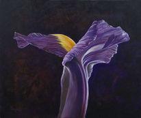 Pflanzen, Blumen, Blüte, Iris