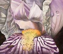 Iris, Sommer, Tiere, Makro