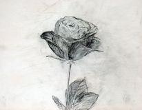 Skizze, Zeichnung, Rose, Zeichnungen