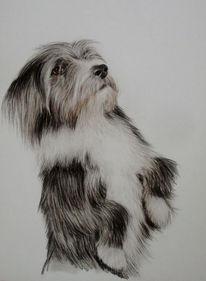 Tierzeichnung, Bobtail, Hundezeichnung, Hund