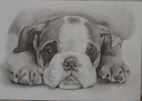 Tierzeichnung, Zeichnung, Hundezeichnung, Zeichnungen