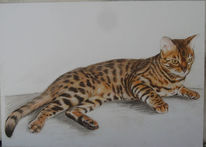 Tierzeichnung, Zeichnung, Wildkatze, Katze
