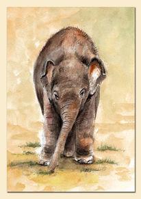 Elefant, Indisch, Baby, Tiergarten