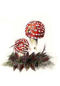 Wald, Rot, Fliegenpilz, Pilze