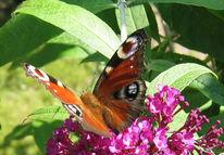 Fotografie, Schmetterling, Pflanzen