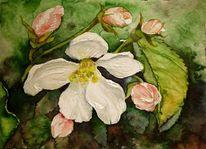 Aquarellmalerei, Apfelblüten, Miniatur, Frühling