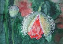 Aquarellmalerei, Mohn, Mecklenburg, Blumen