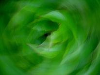 Grün, Fotografie, Blätter, Lichtmalerei