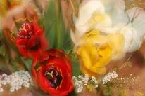 Wischeffekt, Lichtmalerei, Blumenstrauß, Lightpainting