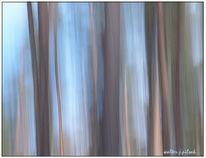 Wald, Lichtmalerei, Abstrakt, Wischeffekt