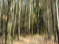 Wischeffekt, Lichtmalerei, Fotografie, Wald