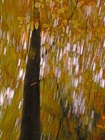 Lichtmalerei, Verwischen, Baum, Lightpainting