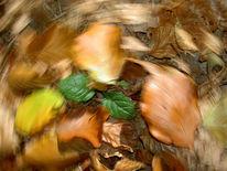 Wischeffekt, Herbstlaub, Lichtmalerei, Vergänglichkeit