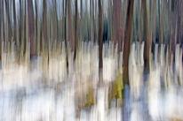 Lichtmalerei, Lightpainting, Wald, Winterende