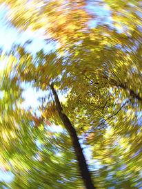 Baum, Wischeffekt, Wirbel, Lichtmalerei