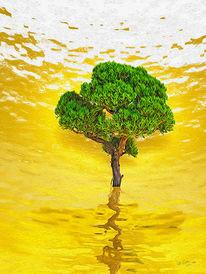 Wasser, Gelb, Bonsai, Grün