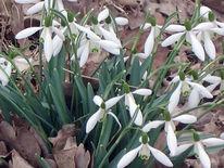 Frühling, Blumen, Landschaft, Fotografie