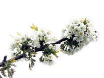 Frühling, Baum, Landschaft, Fotografie
