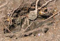 Insekten, Erde, Fotografie, Loch