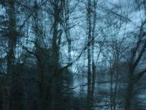 Wald, Blau, Fotografie,