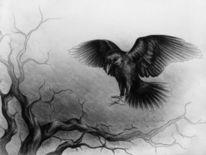Krähe, Vogel, Dunkel, Baum