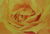 Rose, Gelb, Blumen, Malerei