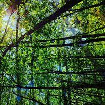 Zweig, Äste, Blätter, Stamm