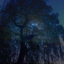 Baum, Nacht, Dunkel, Mond