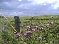 Zaun, Weide, Sommer, Distel