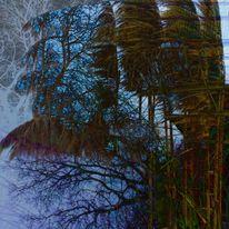Untiefe, Pampasgras, Geisterbäume, Laubbäume