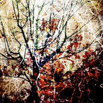 Farben, Gewirr, Baum, Blätter
