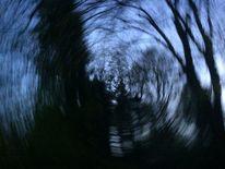 Baum, Abend, Himmel, Nacht