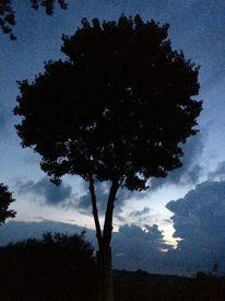 Baum, Wolken, Himmel, Busch