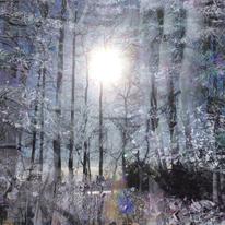 Schnee, Sonne, Baum, Zweig