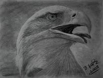 Portrait, Freiheit, Adler, Natur